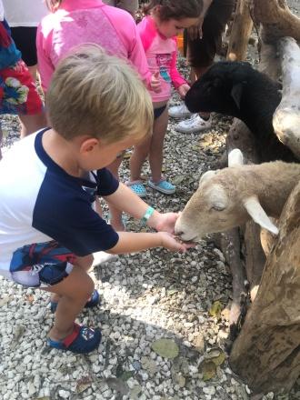 Alimentando os animais no Sandos Caracol